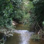 Lane Cove River at Browns Water Hole (24838)