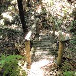 Crossing a small timber bridge (248392)