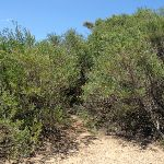 Upper end of Grass Tree Track (249493)
