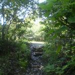 Track through dense weeds (24949)