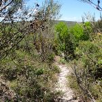 The Grass Tree Track (249577)