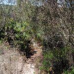 Overgrown track on Grass Tree Track (249637)