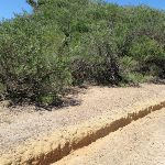 Upper end of Grass Tree Track (249817)