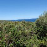 Ocean glimpse through the taller heath on Geebung Track (249910)