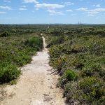 Walking through the low heath on the Geebung Track (250090)