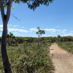 Low heath on the Geebung Track (250321)