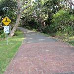 Road leading beside the bush (252695)
