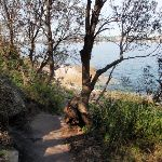 Hermitage Foreshore Walk near the waters edge (252983)
