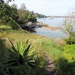 Weedy section of the Hermitage Foreshore Walk (253208)