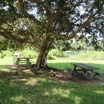 Picnic area behind Strickland House (253721)