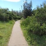 Track near the Gap Bluff (256736)
