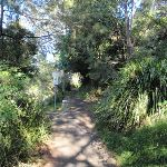 Bushwalking in Mosman (258155)