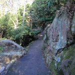Walking track near Mosman (258170)