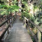 Bushwalking in Mosman (258257)