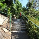 Steps on track in Cremorne Reserve (258800)