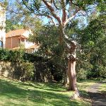 Interesting trees and homes along this bushwalk (258878)