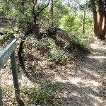 Bottom of Morella Rd track (261566)