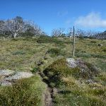 Walking up the Porcupine track near Perisher Valley Reservoir (263444)