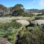 Scattering of boulders and snow gums (263606)