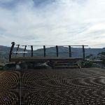 Kangaroo Ridge lookout platform (270599)