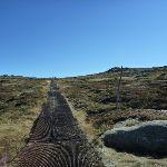 Passing the snow pole line on the Mt Kosciuszko path (271535)