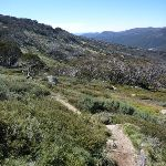 Merrits Nature Track (272141)