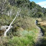 Track winding beside Thredbo River (274031)