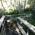 Bridge to Birralee Bushcamp (275141)
