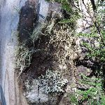 Tree trunk beside track (275294)