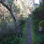 Walking along Merritts Nature Track (275303)