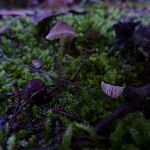 Fungus on Merrits Nature Track (275309)