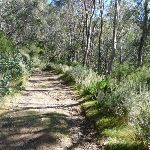 Trail beside Snowgums lift (275951)