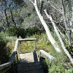 Walking down the stairs on Merrits Nature Track (276017)