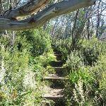Merrits Nature Track (276179)