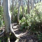 Meadows Nature Track (276551)