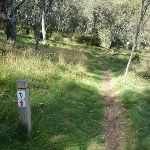 Bridle Trail Loop track (278222)