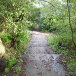 wide track south of Athol Hall (278828)