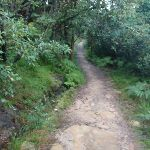 Track leading through the bush (278885)