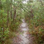 Track through heath (27998)