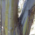 Colourful striping on tree trunk (282032)
