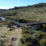 Bridge over the Thredbo River on the Cascade Trail (283502)