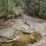 Jerusalem Bay Track creek crossing (28667)