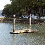 Parsley Bay Jetty (29447)