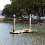 Parsley Bay Jetty (29447)