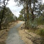 Bullocks Walking track (295018)
