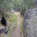 Granite boulder on Bullocks Track (296051)