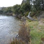 Grassy edge of the Thredbo River (296318)