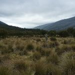 Walking though the grassy plains at Thredbo Diggings (296354)