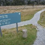 Bullocks Track trackhead (296474)