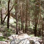 Forest on the steep climb out of The Basin (29729)